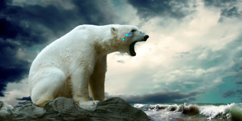 Polar-Bear crying