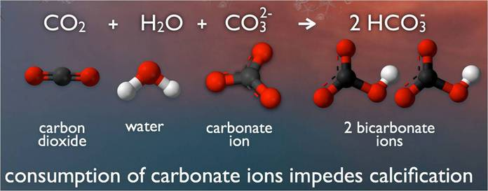 co2 carbonate noaa