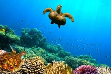 coral-reefscaribbean