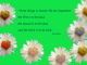 daisy tuula