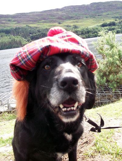tartan dog