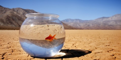 goldfish_bowl