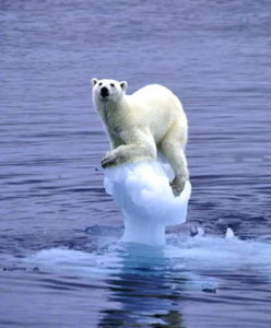 polar bear iceberg