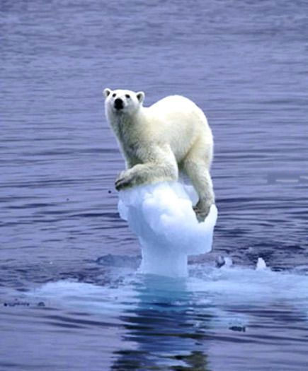 Image result for polar bear ice