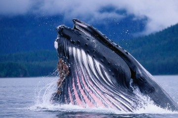 Ocean-arctic-whales