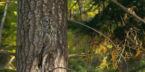 animal-camouflage-owl