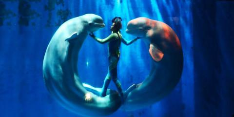 dolphin-dave-christiansen