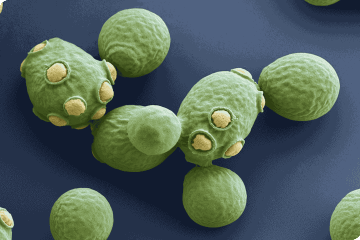 microbiologyonline.org.uk