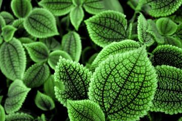 hd leaf background