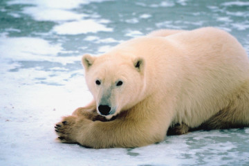melting-polar-ice